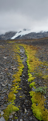 Harding Icefield Trail alpine stream thumbnail